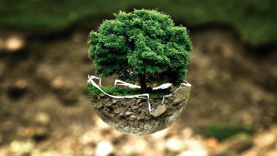 Responsabilidad medioambiental: ¿cómo afecta a tu empresa la nueva ley?